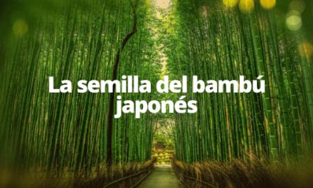 La semilla del bambu Japones