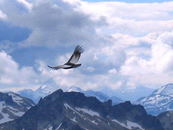Con las alas al viento