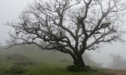 El árbol que perdió su sombra