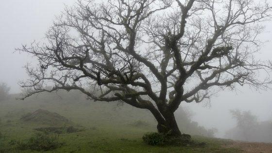 El árbol que perdió su sombra. Cuento Alzheimer