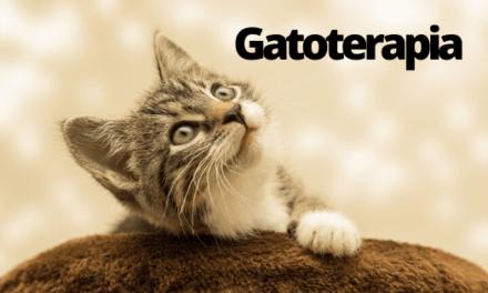 Gatoterapia. ¿Qué es la Gatos-terapia?