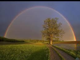 El árbol y el arcoiris