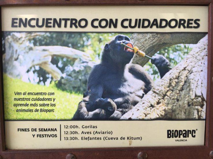 Experiencia Bioparc Valencia