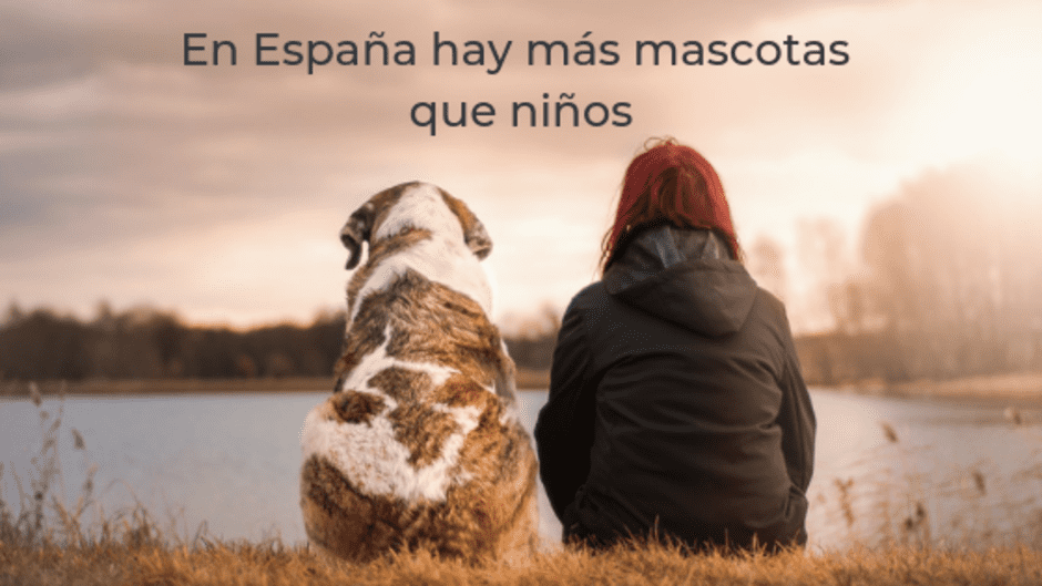 En España hay más mascotas que niños