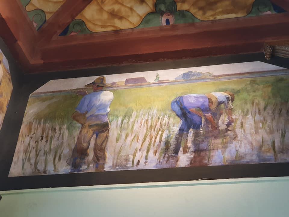Frescos arrozales